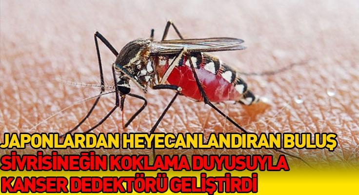 Japon araştırmacılardan dev buluş! Sivrisineğin koklama duyusuyla kanser dedektörü geliş...