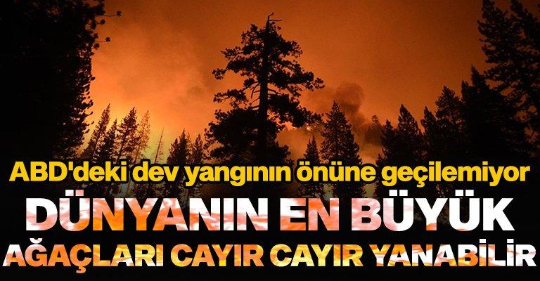 ABD'de çıkan dev yangın sonucu dünyanın en büyük ağaçları yanma riskiyle karşı kar...